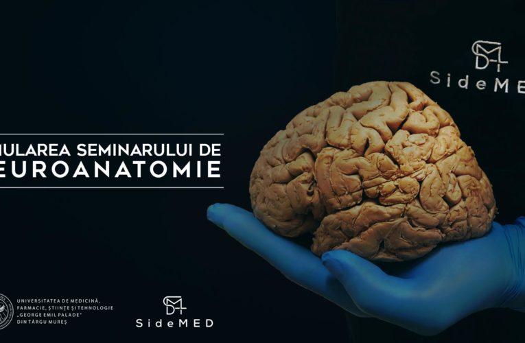 Simularea seminarului de neuroanatomie (online)